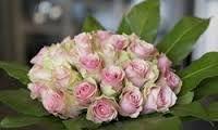 Image result for lyse roser