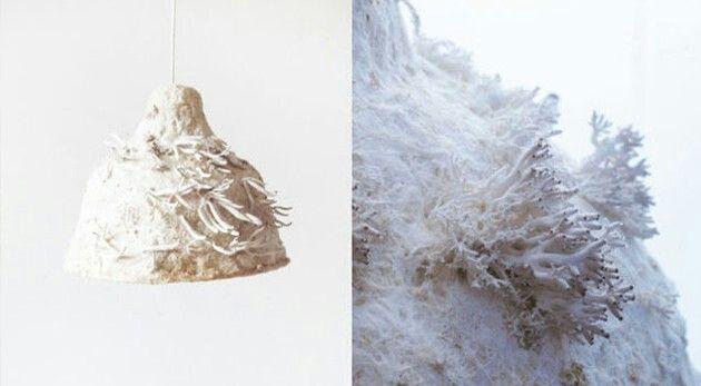 Luminaire Myx, by Jonas Edvard, fibres naturelles et developpement d'un champignon rt son mycélium