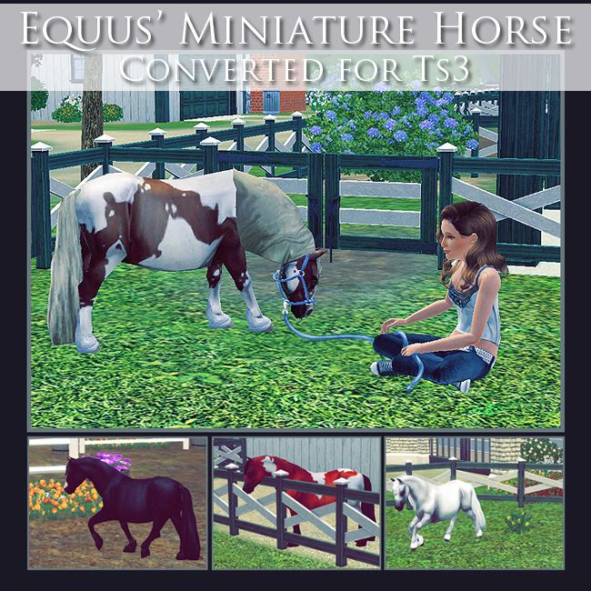 adoreible sims 3 horses | equus miniature horse