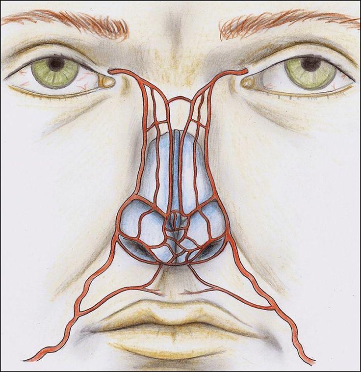 артерии лица в картинках обучение