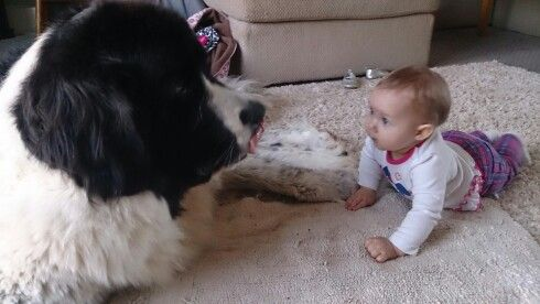 Landseer and baby