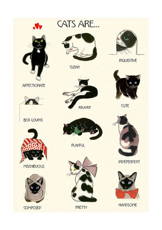 Instructional adjective wall artwork – Cat Lovers print – Cat Artwork – Cat wall artwork – Cat print – 8.3″ X 11.8″ – four for 3