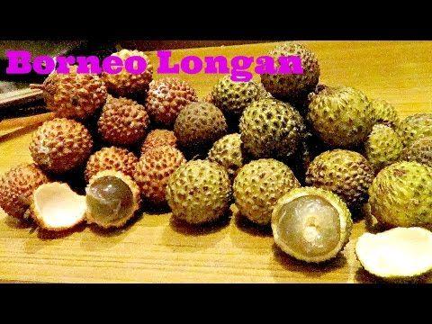 Borneo Wild Longan (Dimocarpus longan) Weird fruit explorer Ep. 140 - YouTube