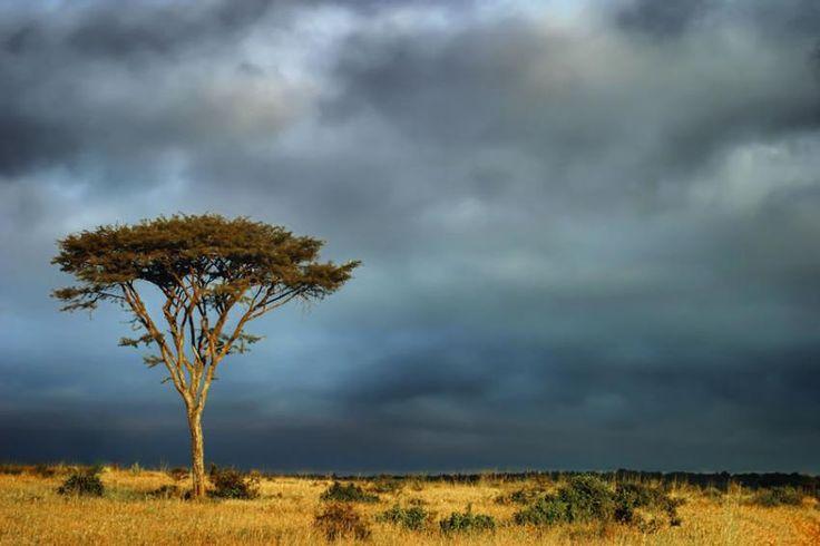 Pierdut în Kenya