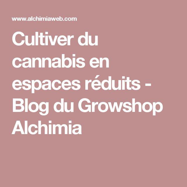 Cultiver du cannabis en espaces réduits - Blog du Growshop Alchimia