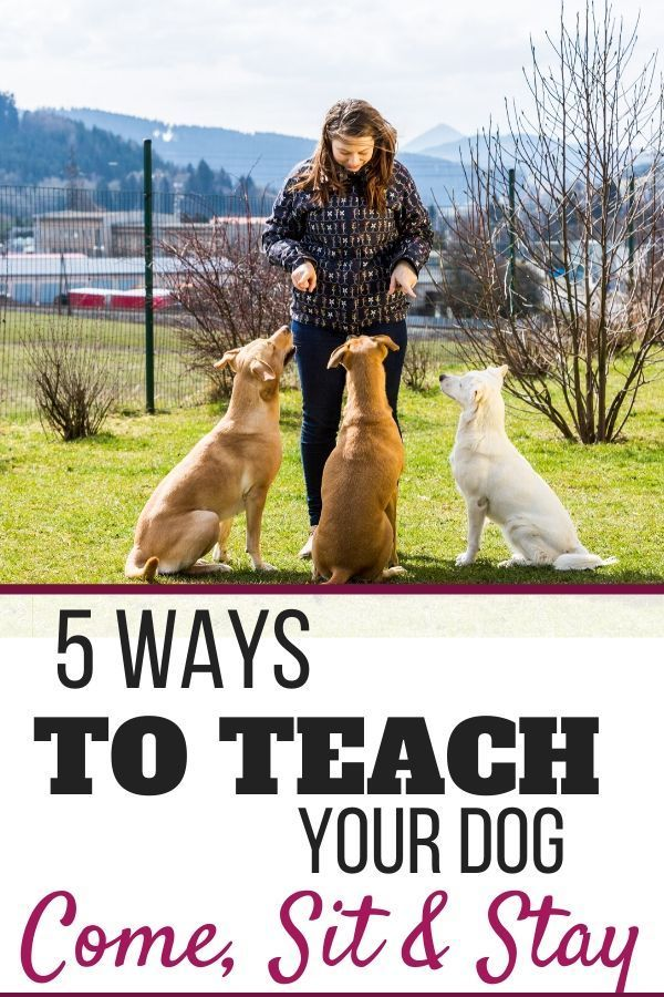 5 Easy Ways To Teach Your Dog To Come Stay Or Go To Bed