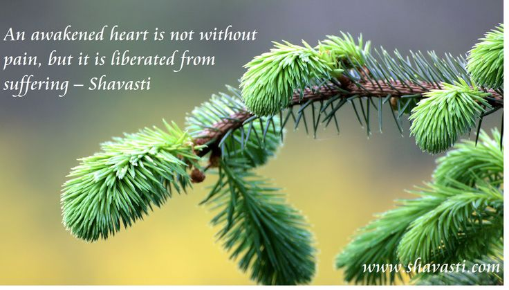 Teachings from an Awakened Heart - Shavasti  www.shavasti.com