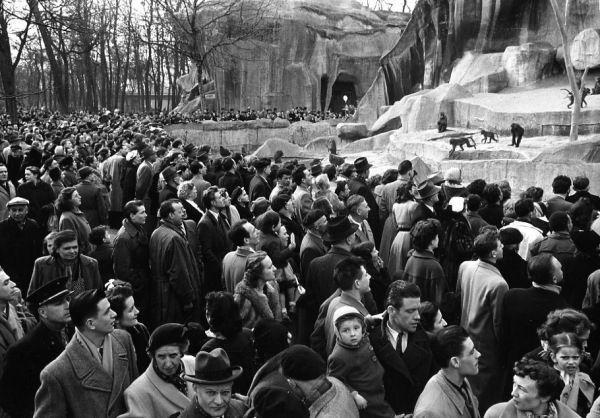 Dimanche au Zoo de Vincennes. Mars 1953. ¤Robert Doisneau. Atelier Robert Doisneau | Site officiel