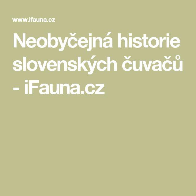 Neobyčejná historie slovenských čuvačů - iFauna.cz