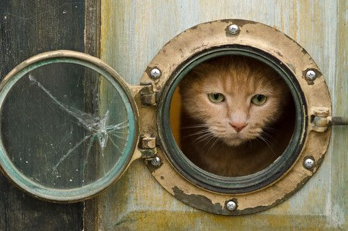 Porthole door for the cat! http://www.completely-coastal.com/2012/08/porthole-windows-for-your-home-door-for.html