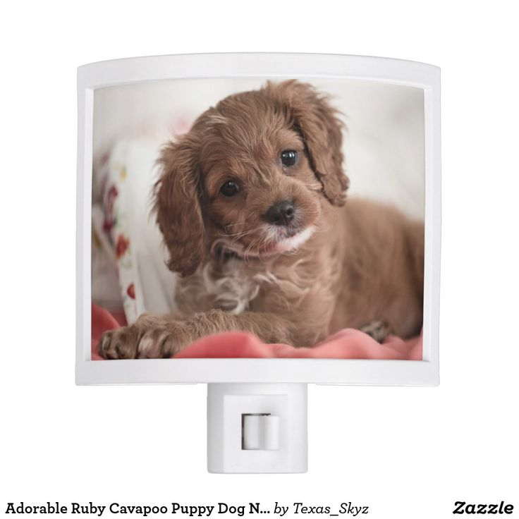 Adorable Ruby Cavapoo Puppy Dog Night Light | Zazzle.com ...