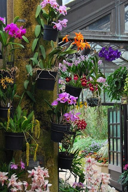 Orchids Garden Design orchids hanging in clay pots on a privacy fence using hangapot the hidden hanger Orchid House