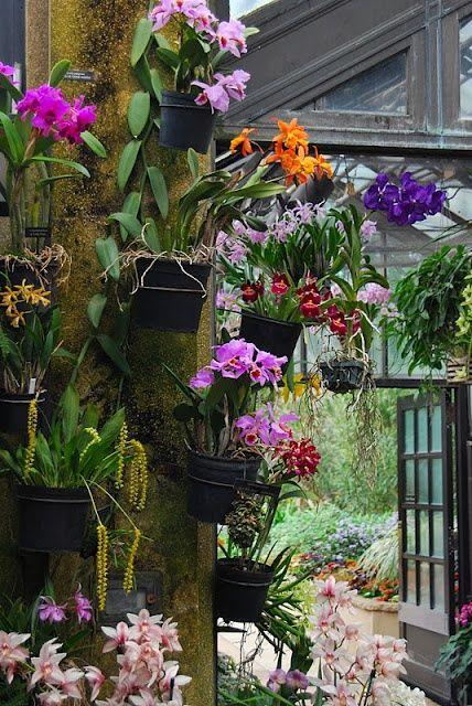 Orchids Garden Design orchid botanical garden singapore more Orchid House