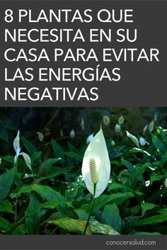 8 plantas que necesita en su casa para evitar las energías negativas #salud