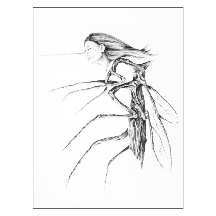 """Graphite 7"""" X 5"""", MOSQUITO, She inhales, with her nose in the air ... finding nothing to please her.  MARINGOUIN, Elle flair, le nez en l'air... ne trouvant rien pour lui plaire. #drawing #artcollectors #graphite #art #artwork"""