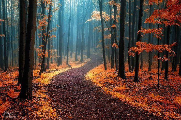 Des chemins où la randonnée devient un rêve On trouve des références aux routes et aux chemins dans la littérature, …