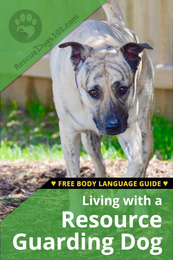 Living With A Resource Guarding Dog Dog Training Dogs Training