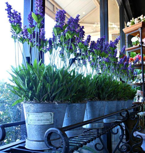 Lavender... Can't help but think of   Aix en Provence <3
