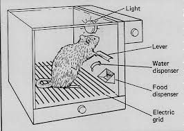 Image result for images of skinner box