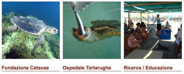 Fondazione Cetacea Riccione onlus - Centro Adria Riccione. Ospedale tartarughe, ricerca ed educazione dell'ecosistema marino, soprattutto del mare adriatico