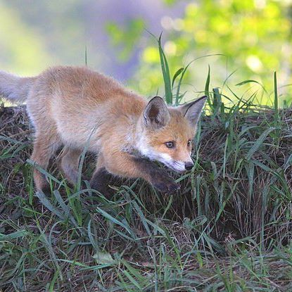 #зверополис#лиса#fox#лисолога#лисиймагазинчик#foxart#зима#розыгрыш#скоровесна#Zootopia#фырфыр#lisologa#inari#kitsune#arcticfox#pet#pets#petstagram#cute#foxvillage#japan#fennec#фенек