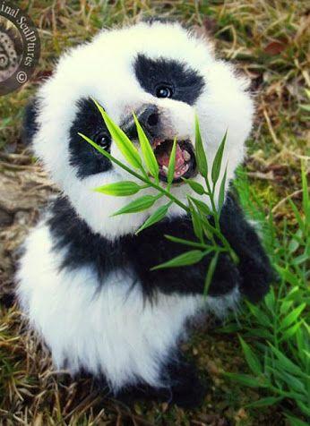 Our World's Wildlife– Сообщество– Google+ – Samantha Bourque