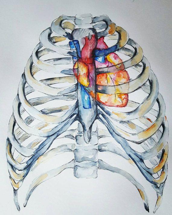 Watercolour Anatomy Art- Heart in Ribcage