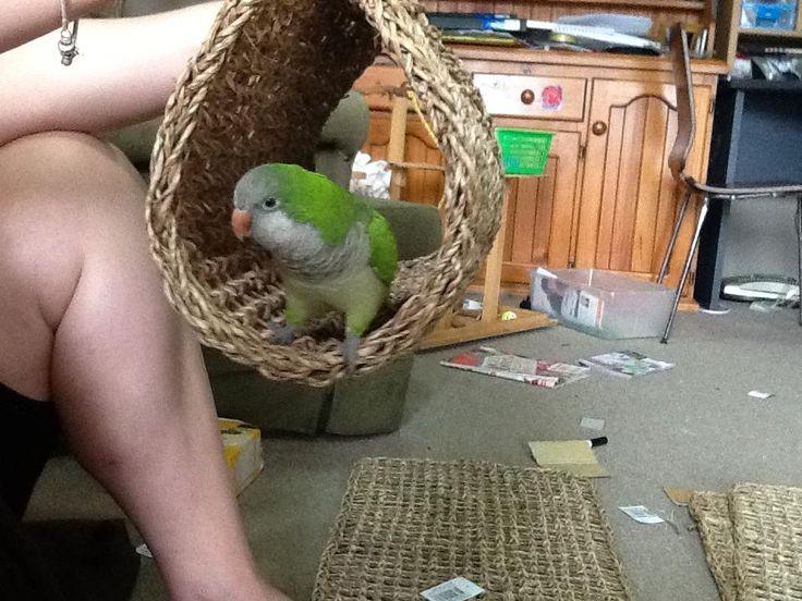 ♥ Pet Bird DIY Ideas ♥ Use a placement as a homemade shelter