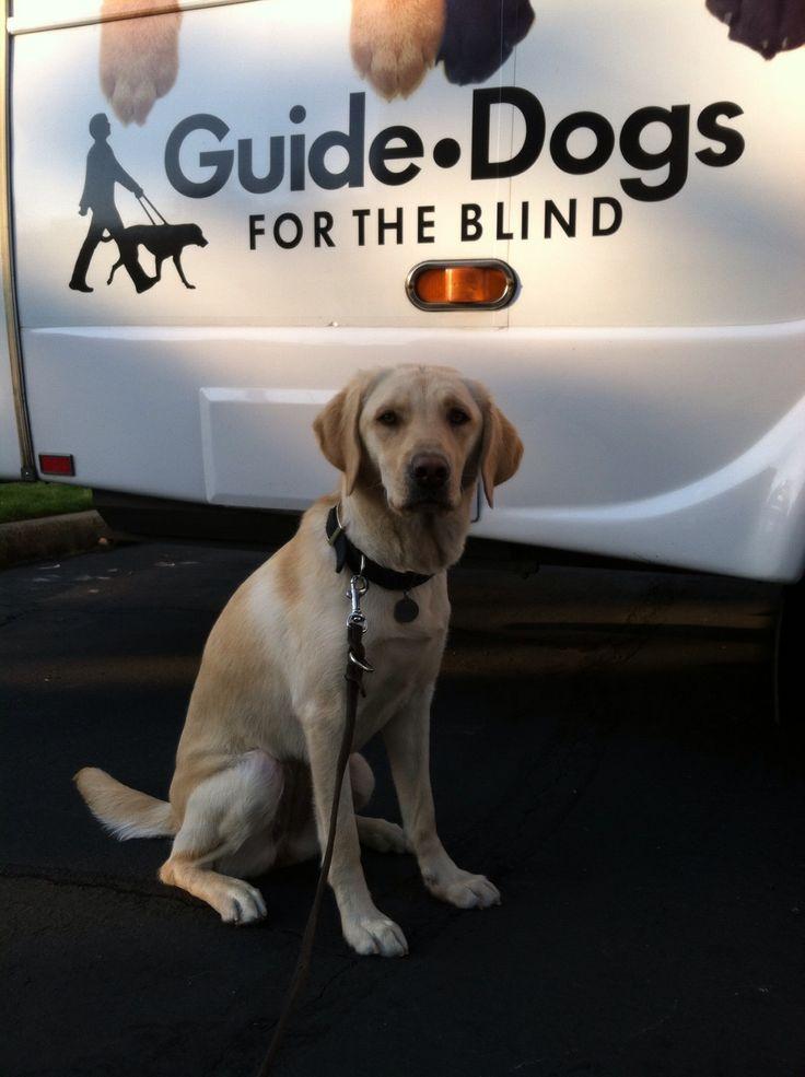 Fresh Blind Dog Gym