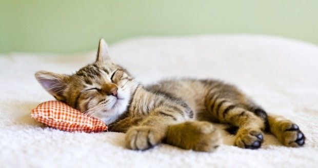 Successful treatment for feline distemper? | Vitamin D Council