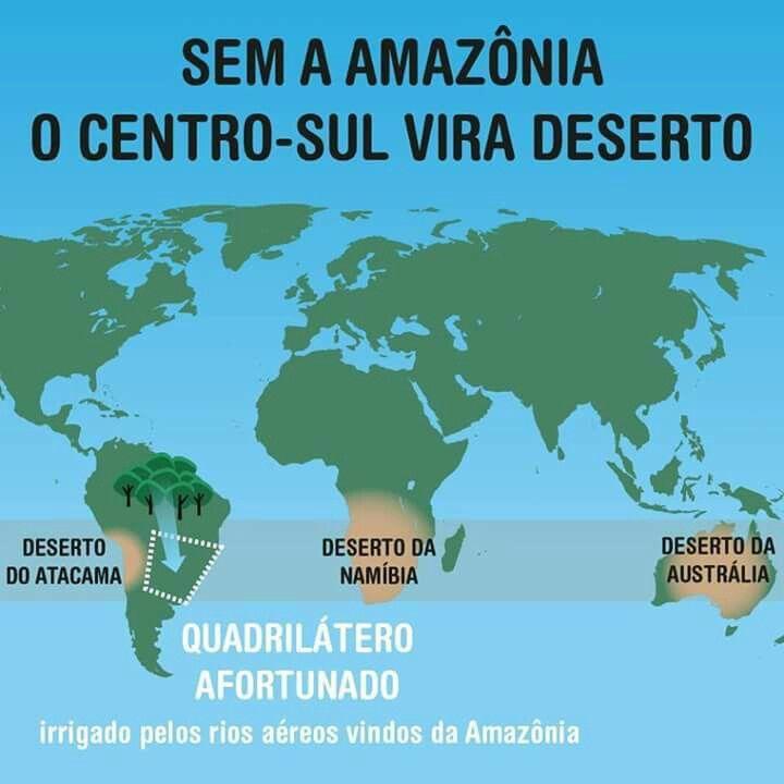Amazonia importance