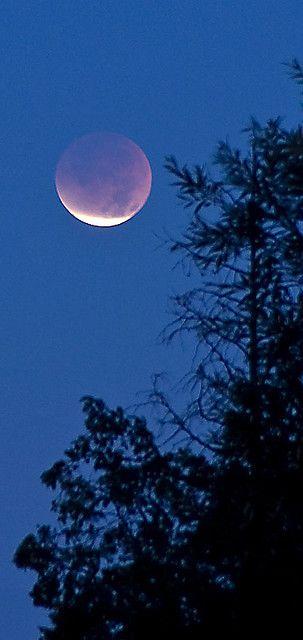 Lunar Eclipse -vertical crop -- by Kevbo