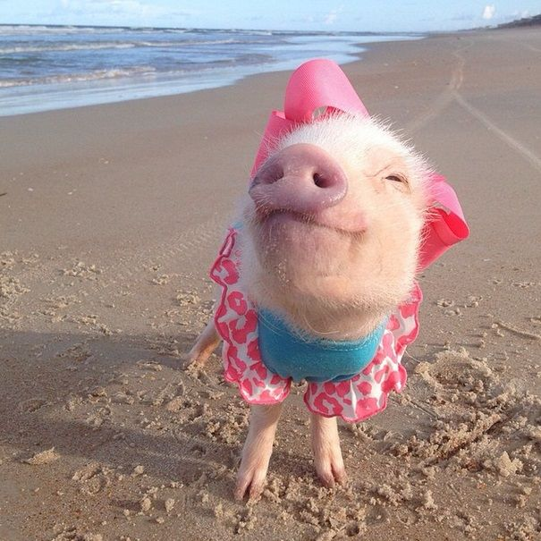 Prissy at the beach modeling the latest in piggy swimwear