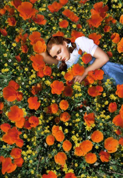 Oz Büyücüsü/ Haşhaş Çiçekleri