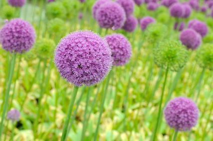 Plants that Thrive in Sandy Soil