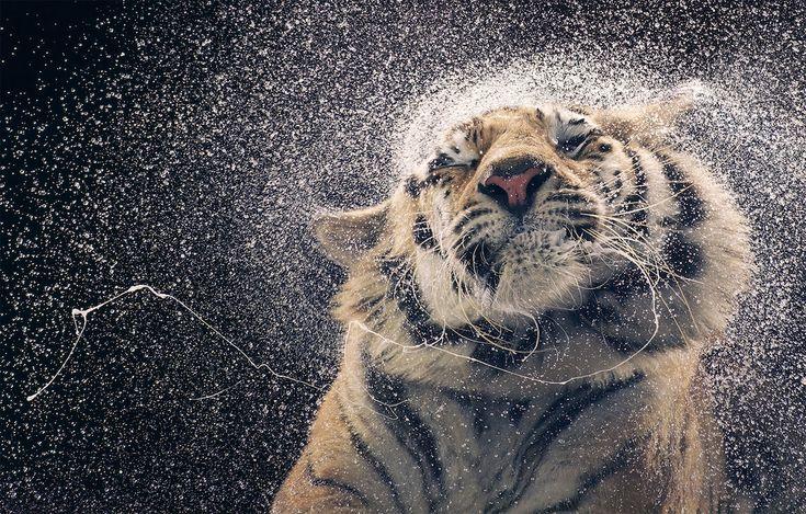 Вымирающие виды животных в фотографиях Тима Флэча/