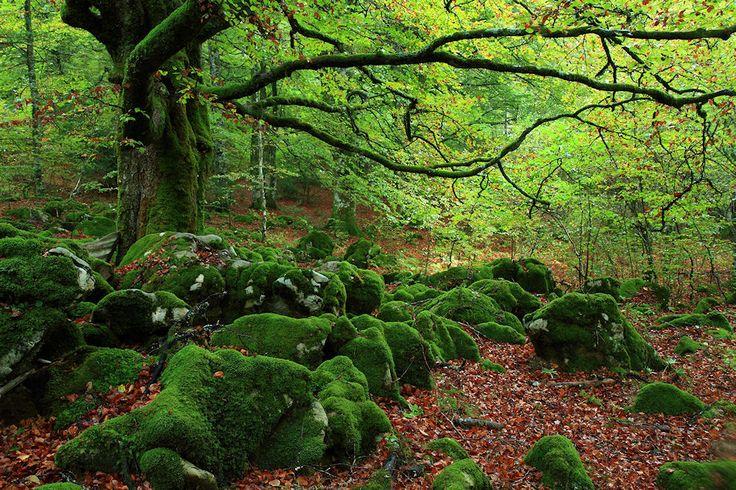 Selva de Irati: Bosque repartido entre el norte de Navarra (España) y el país vasco francés