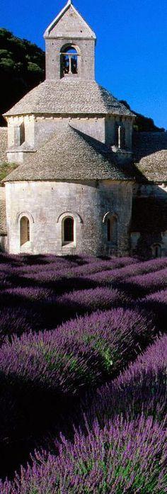 Lavender Fields, Mt.  Ventoux |  Franciaország