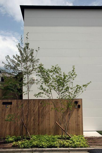 木と白のバランス