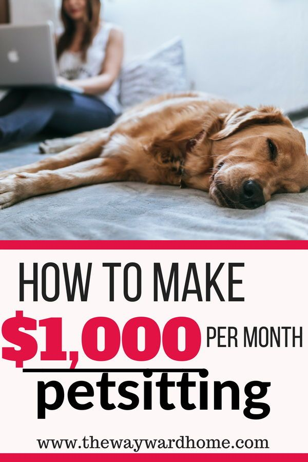 How To Get Pet Sitting Jobs And Make Over 1 000 Per Month Make Money From Home Way To Make Money Pet Sitting Jobs