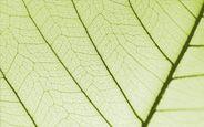 Essentiële oliën - wetenschappelijke aromatherapie