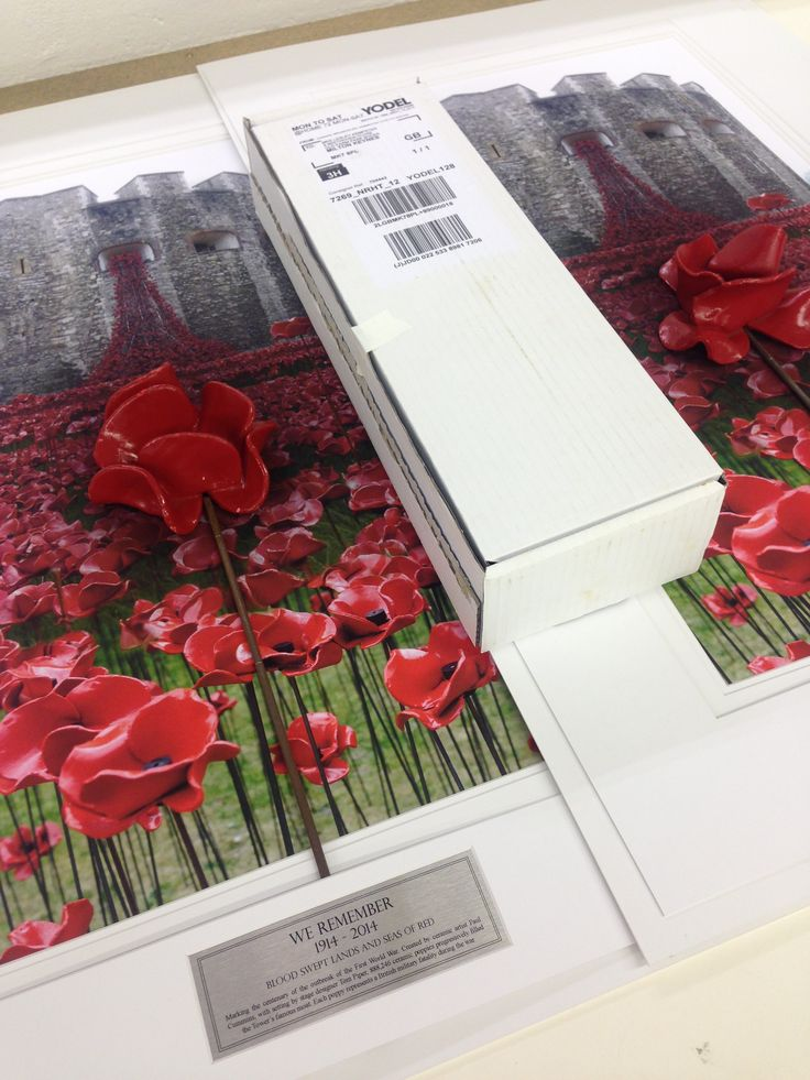 Did you purchase a Tower Of London Ceramic Poppy? Check out the great displays we have on offer to safeguard and showcase your poppy in its full beauty!
