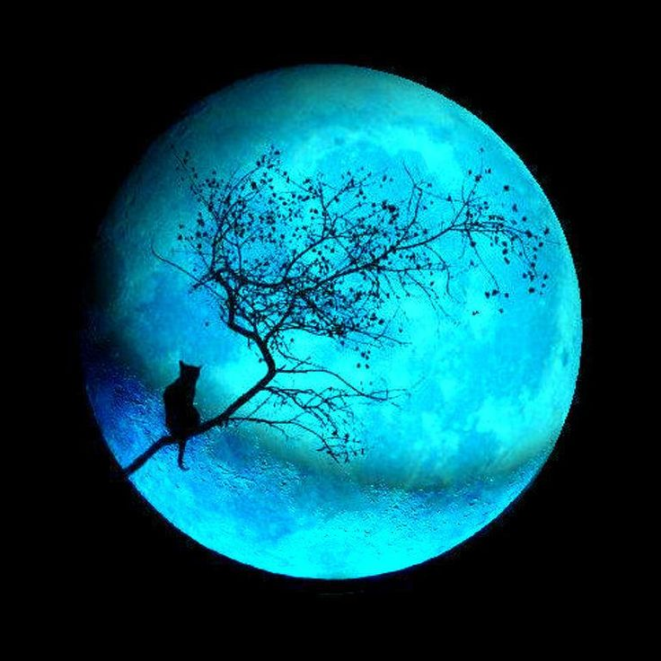 Blue moon.......ONCE IN A BLUE MOON IS ALMOST NEVER-----BUT, THIS KRAZY KITTY CLIMBS THIS TREE MOST EVERY NIGHT JUST TO MEOW AT THE MOON..........ccp