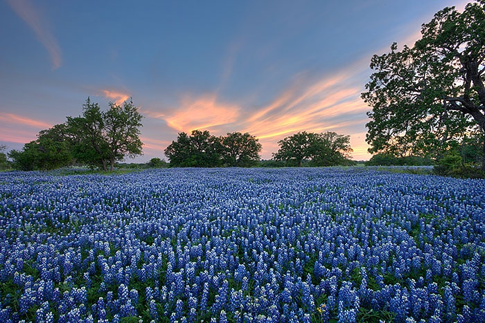 how to become a landscaper in texas