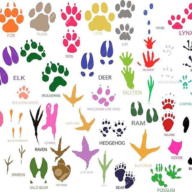 World Animal Day - 4th October  Διεθνής Διακήρυξη των Δικαιωμάτων των Ζώων 1978  #animals  #4thofoctober  #WorldAnimalsDay
