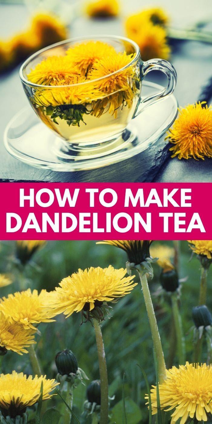 Here S How To Make Dandelion Tea Fresh Dandelion Tea Can You Use Dandelions For Tea Dandelion Tea R In 2020 Dandelion Tea Dandelion Tea Recipe Dandelion Recipes