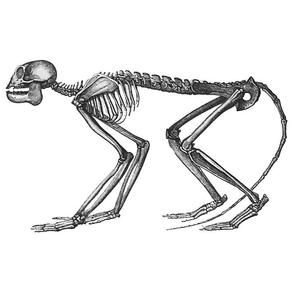 51 best Dino-mite Inspiration images on Pinterest