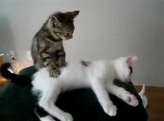 Vídeo - Massagem felina