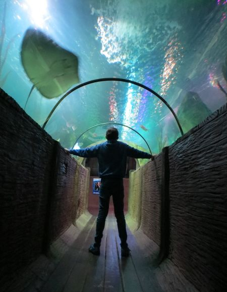 Blackpool Sea Life Centre; Discounts, 2 for 1 Vouchers & more | Cheap ticket deals