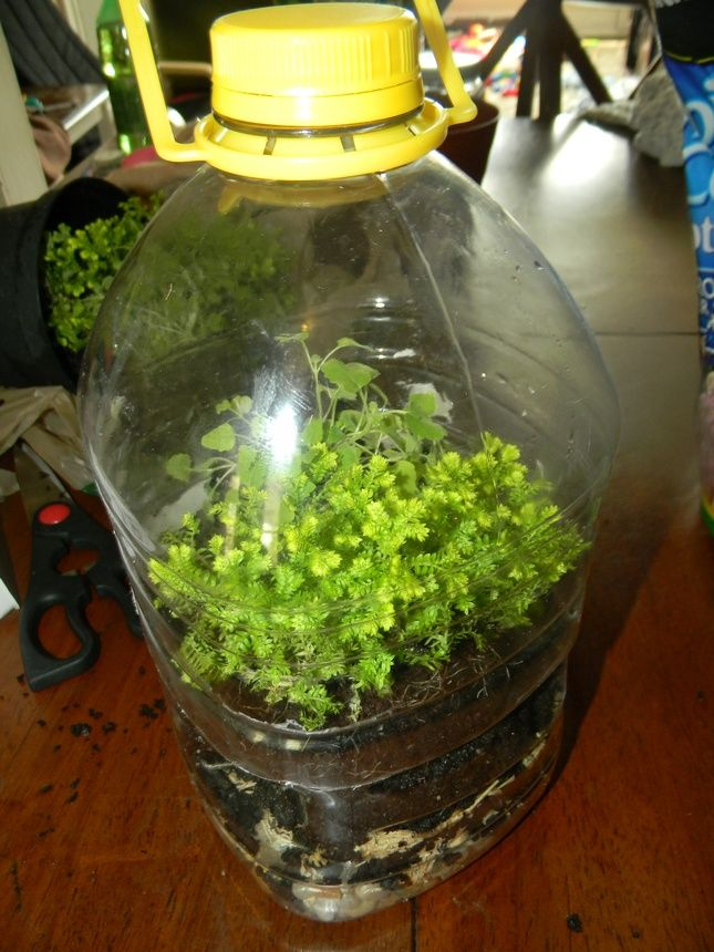 How to Make A Rainforest in a Bottle - Encourage Creativity - Quora